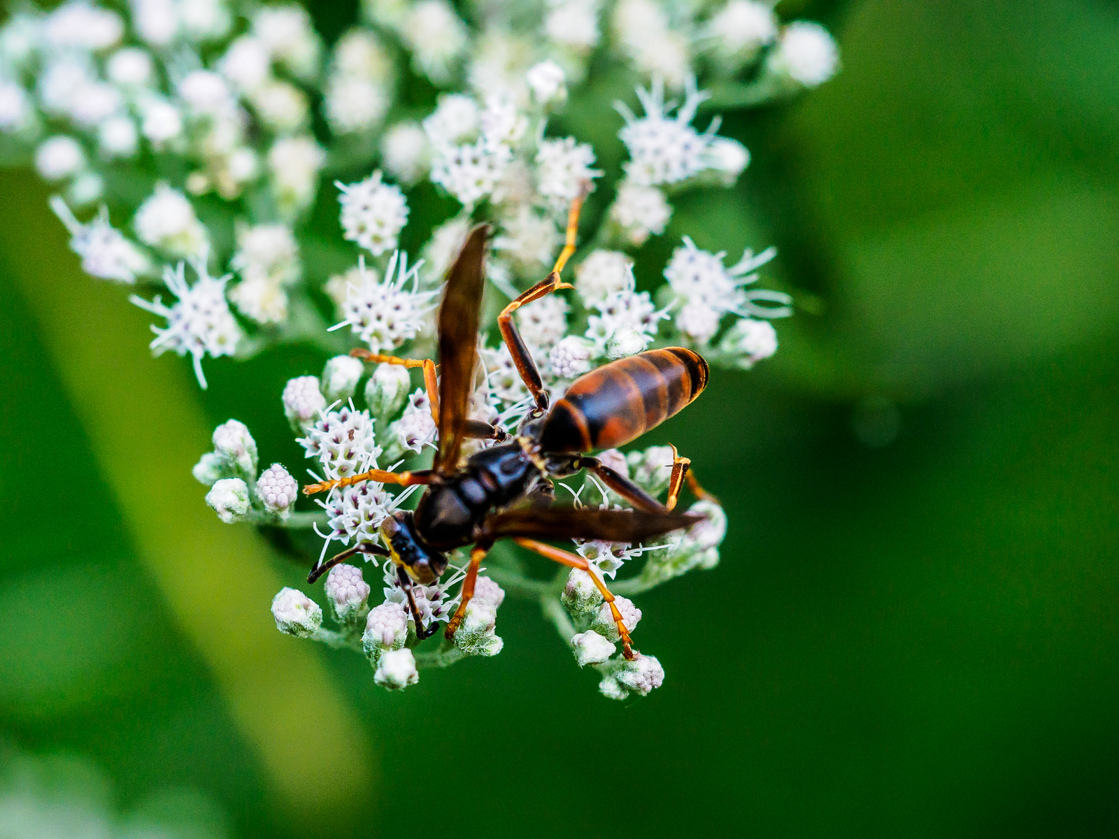 ltd-wasp-insect-photo-9090061