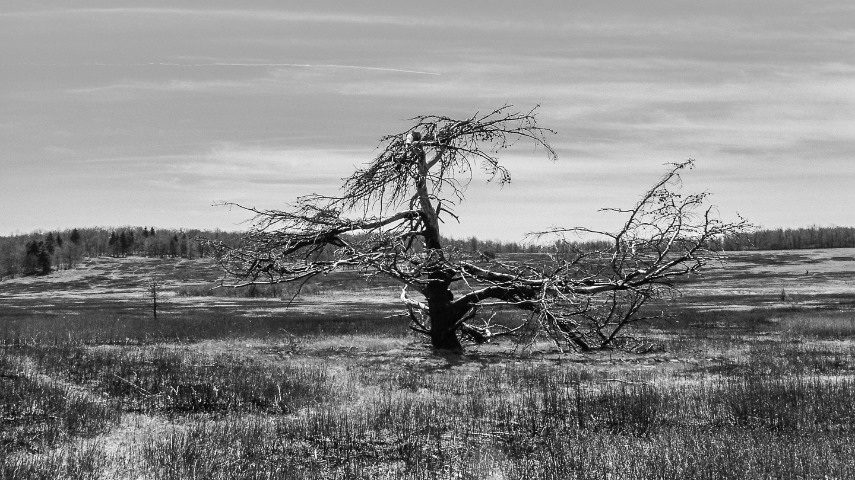 Lonr old tree