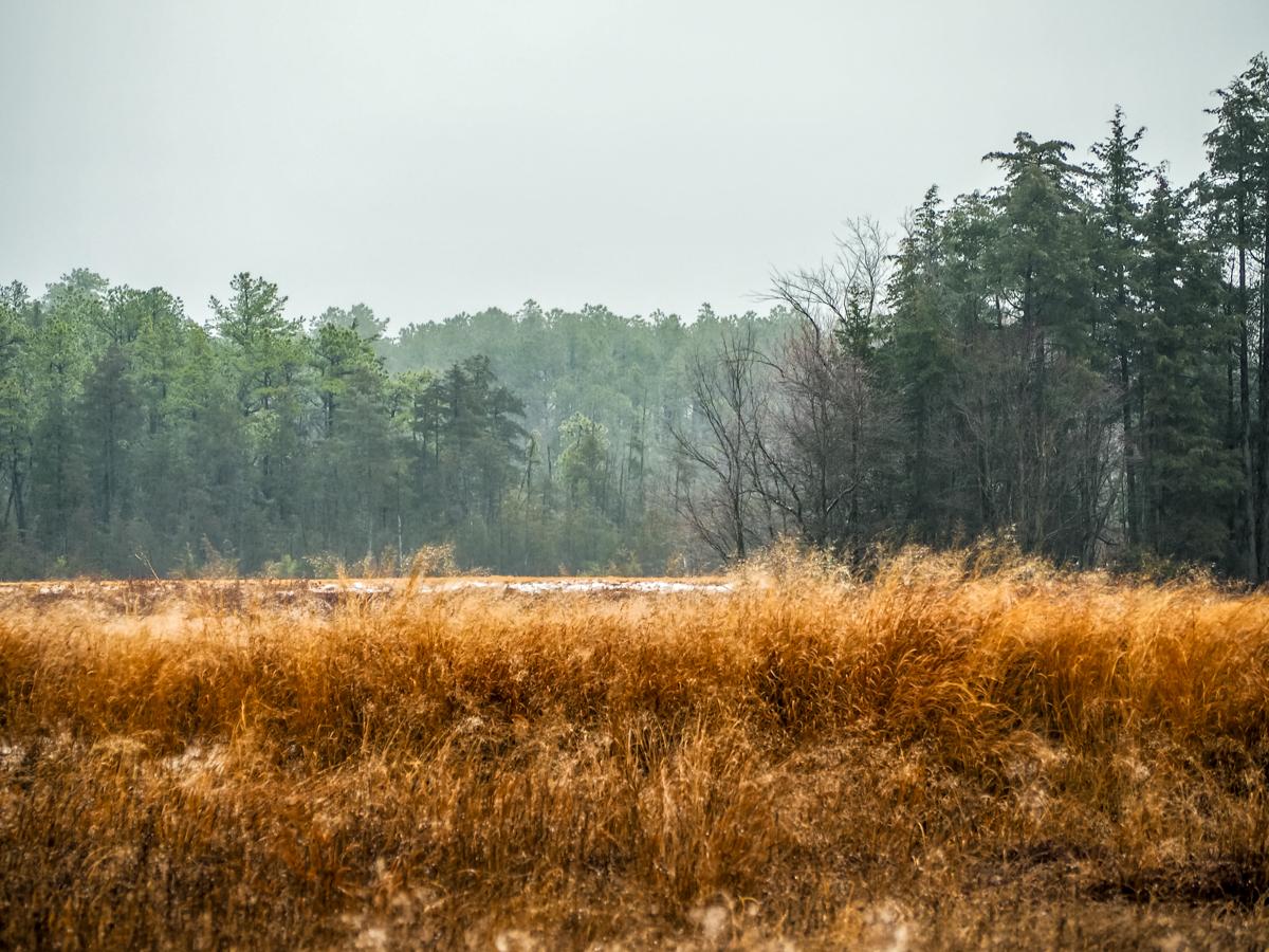 pinelands-landscape-photo-170024