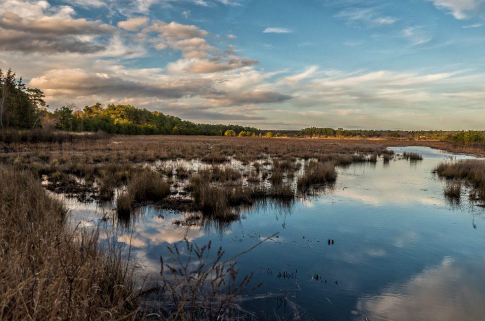 pinelands-fpp-