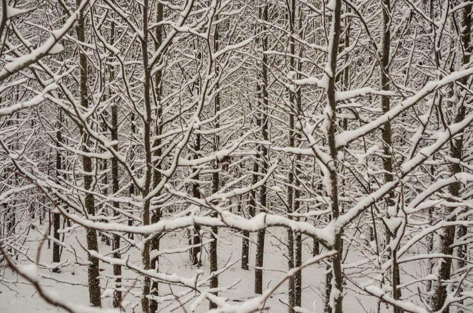 trees-snow-2090311