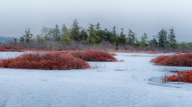 whites-bog-winter-5272-