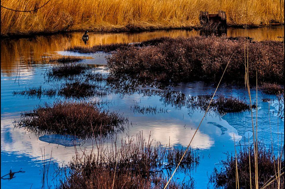 pineland-reflection-