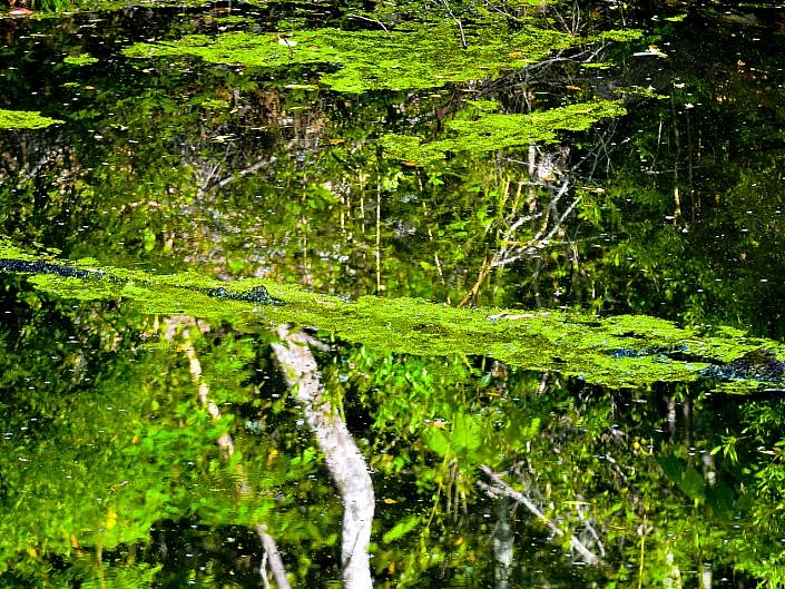 Abstract Reflections photograph