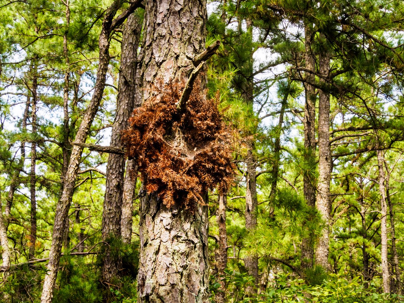 pine-wroth-8270016