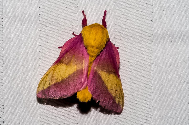 whitesbog-moths-8050041