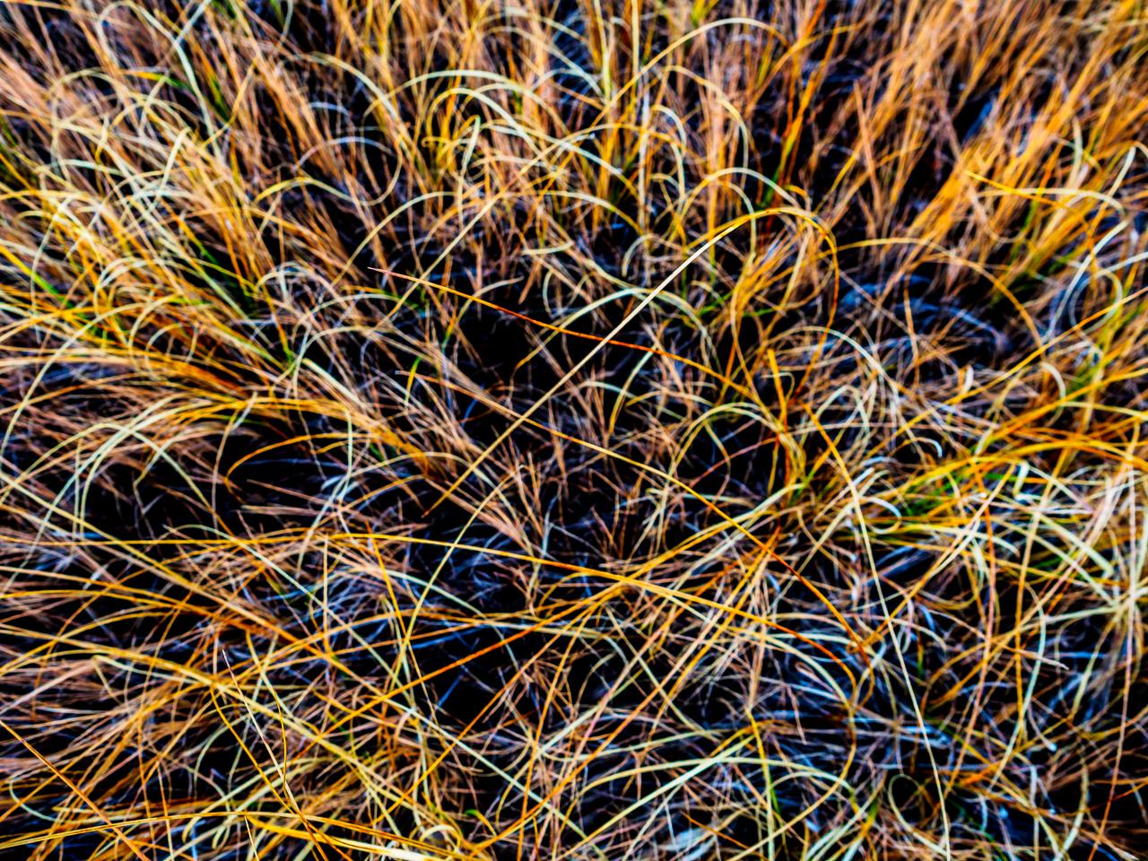 blades-of-grass-040086
