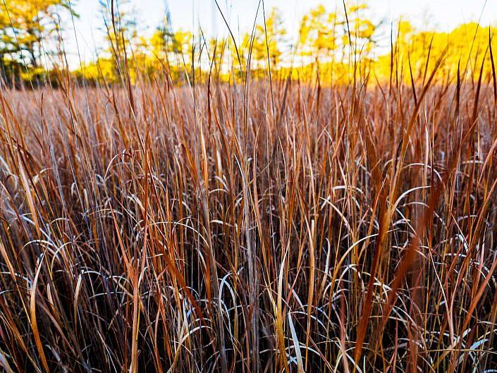 blades-of-grass-040088