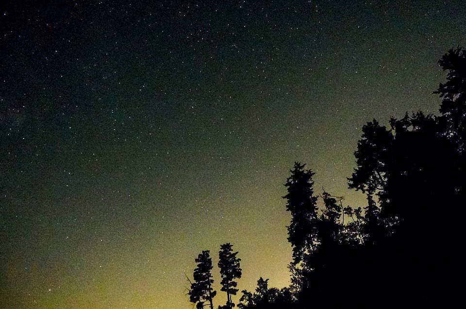 stars-trees-nite-9240016