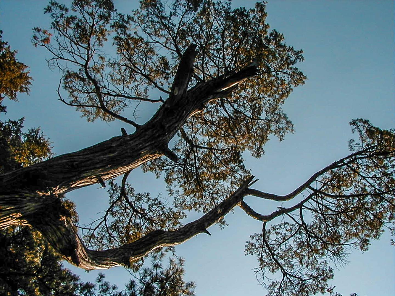 trees-mulica-river-020014