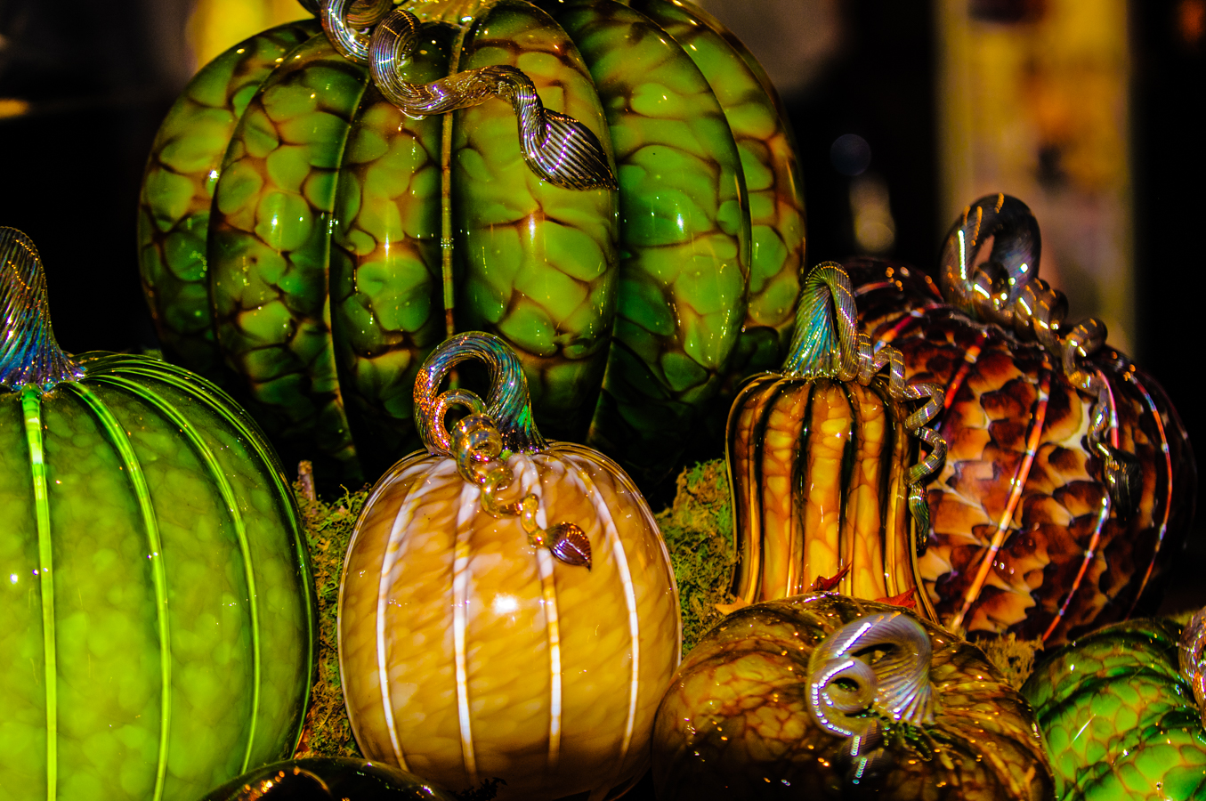 pumpkins-photos-3779