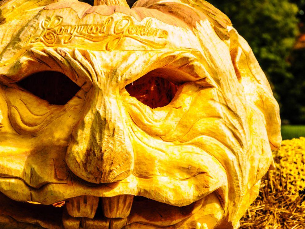 pumpkins-photos-3835