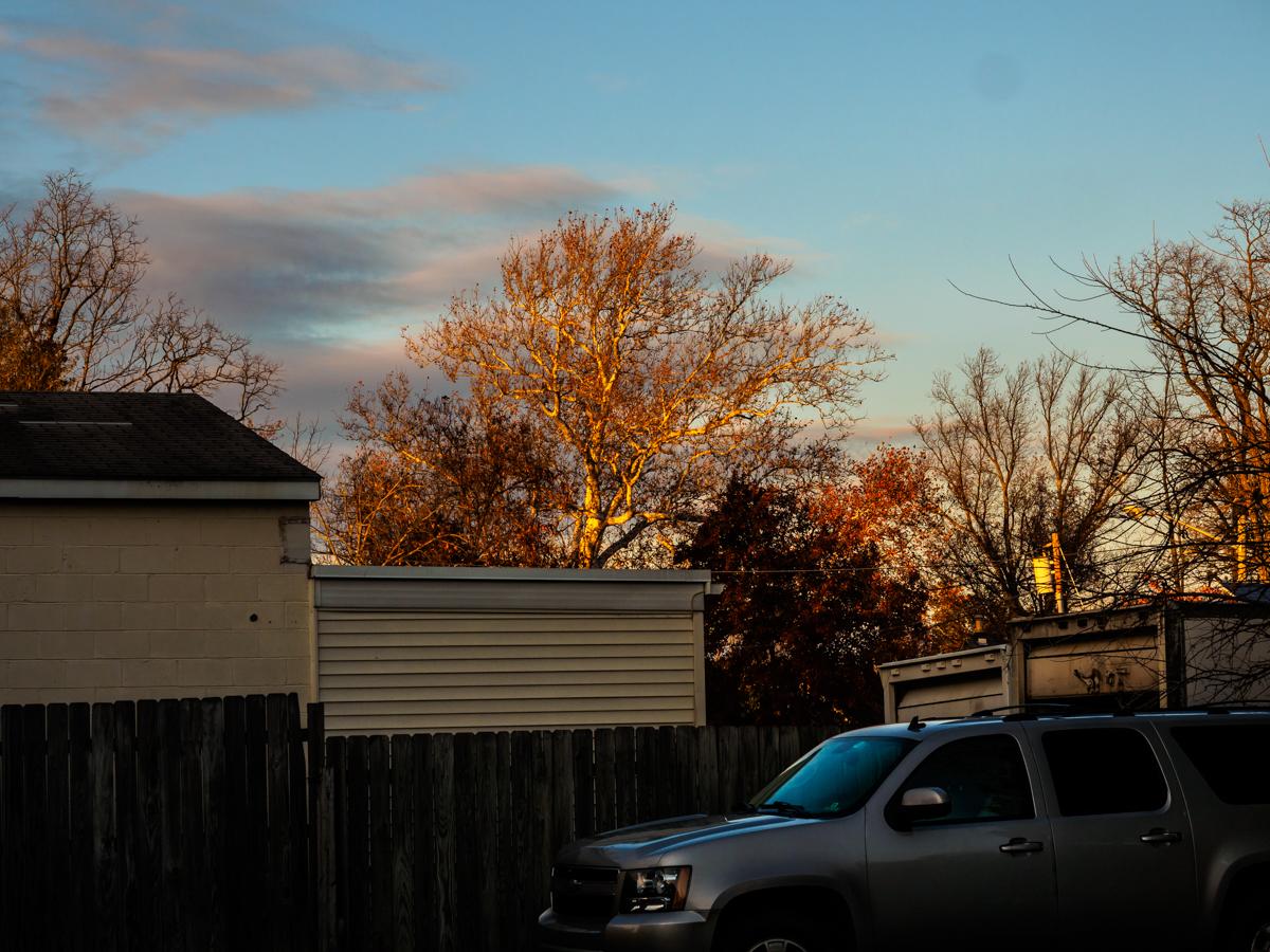medford-tree-photo-140003