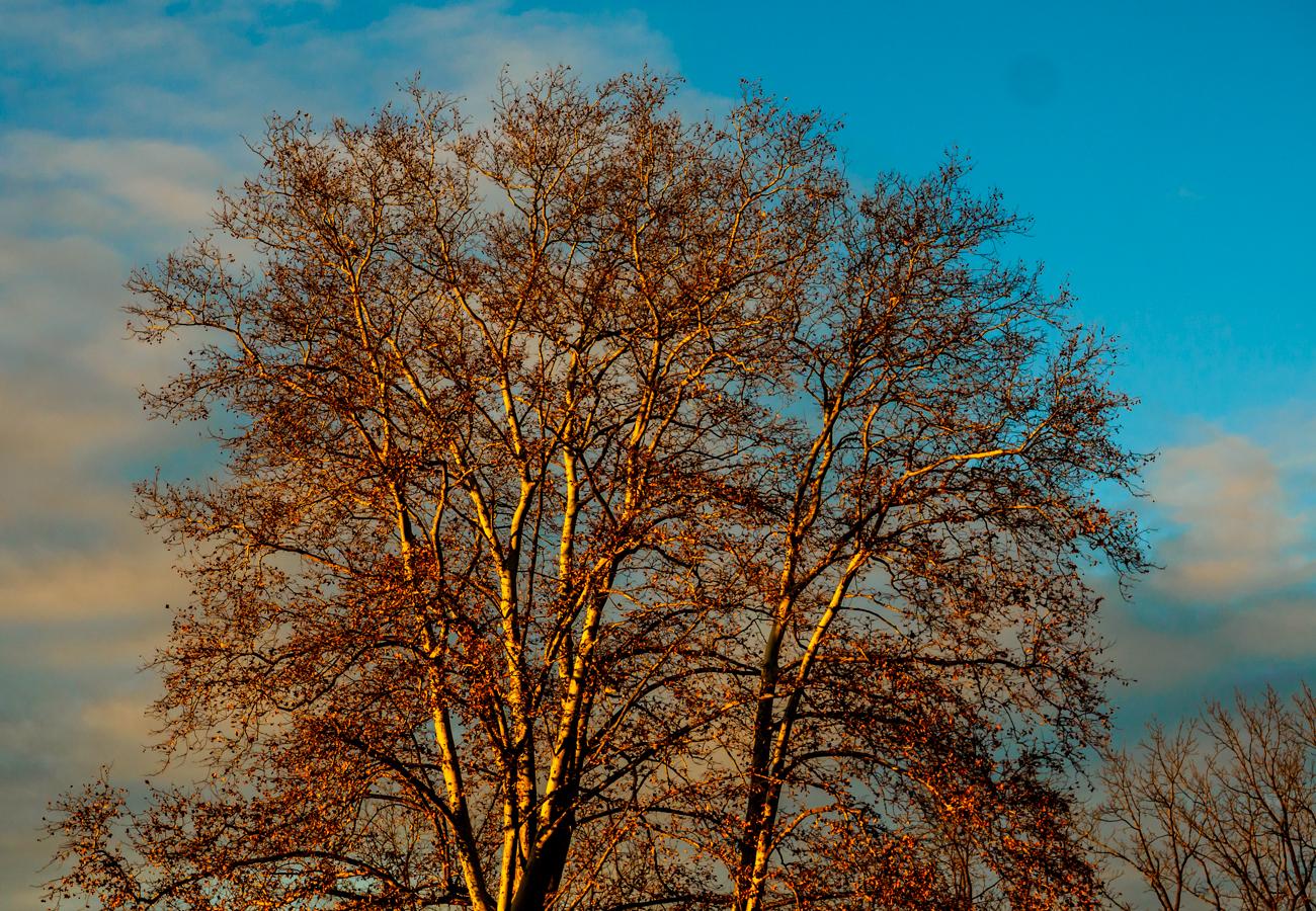 medford-tree-photo-140004