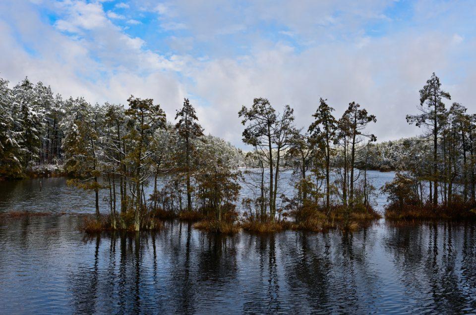 ltd-pine-lands-snow-5729