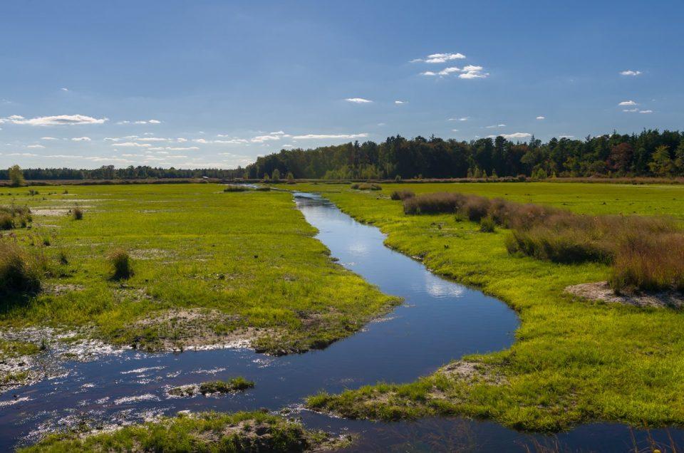 pinelands-photo-white-sbog-3491