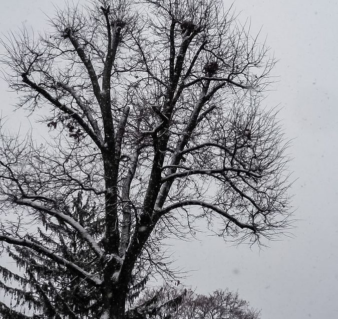 tree-houses-1170007