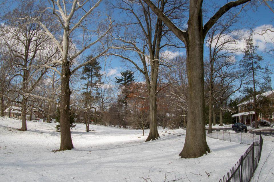 winter-haddionfield-trees-2