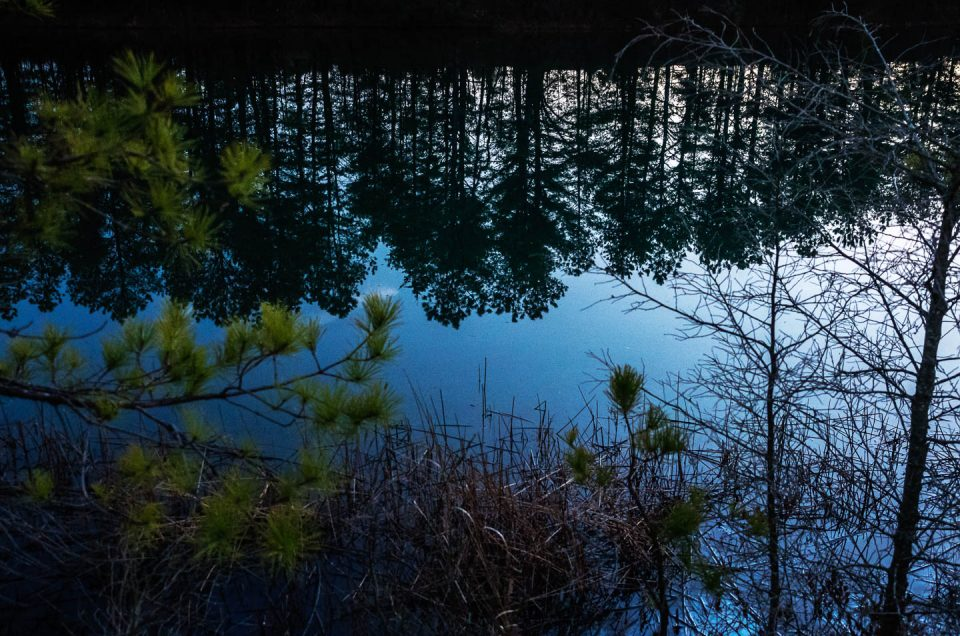 pine-land-reflections-2240497
