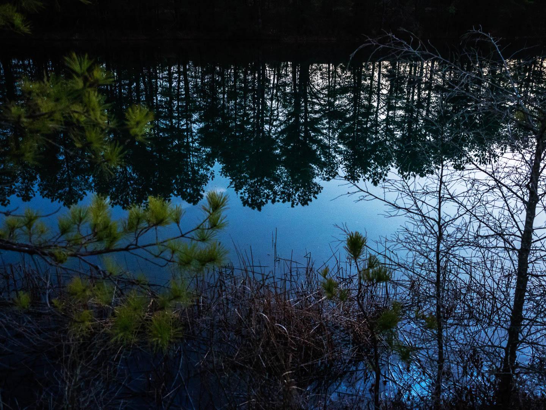 pine-land-reflections-2240497