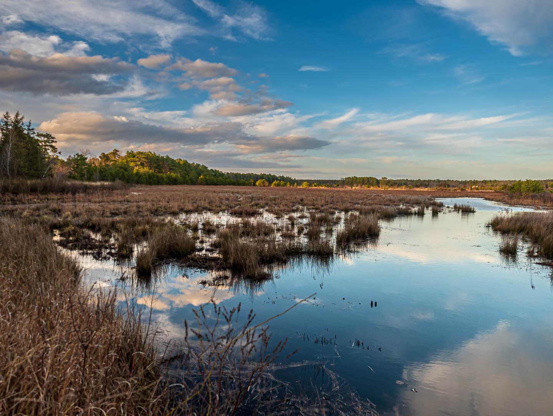 pinelands-reflections-photos