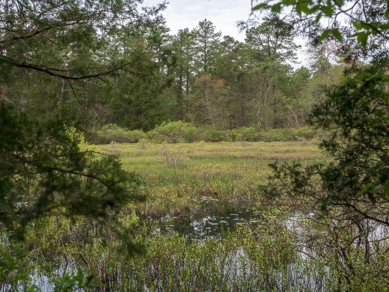 Pine Lands Landscape