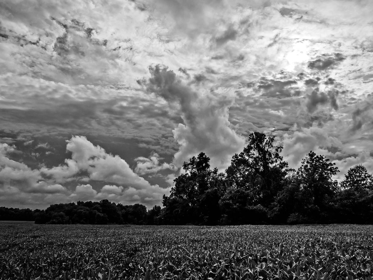 piney-cloudscape-photos