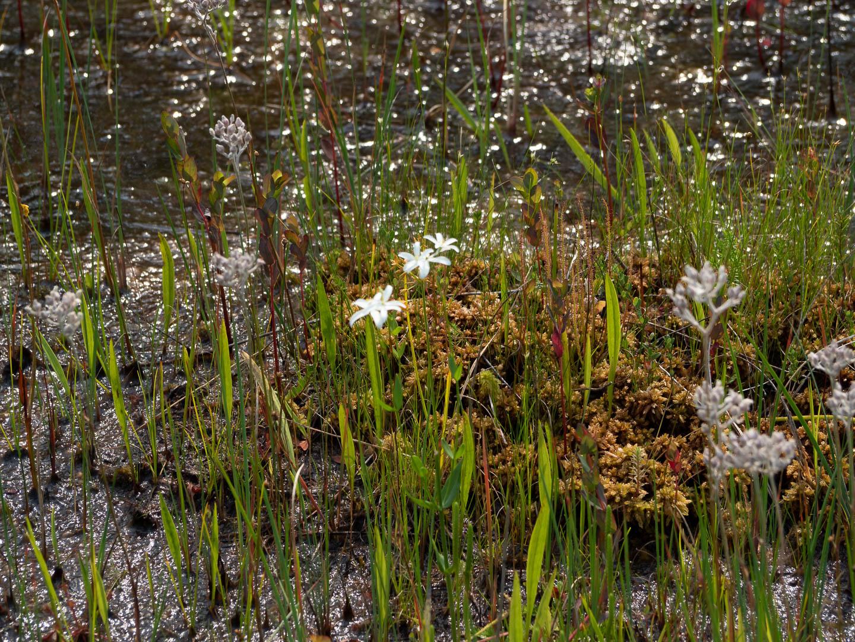webb-mills-bog-pine-lands-14