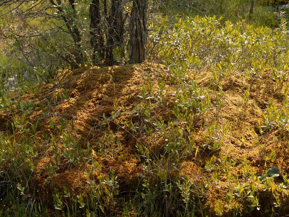 webb-mills-bog-pine-lands-5