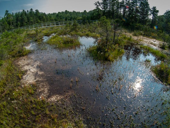 webb-mills-bog-pine-lands-2