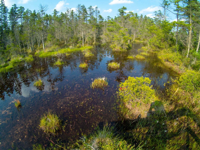 webb-mills-bog-pine-lands-1