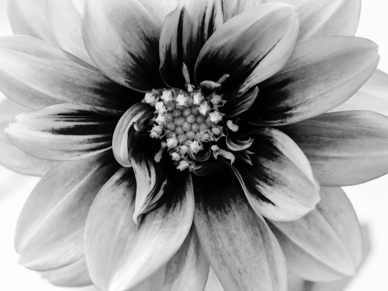 Beautiful Fine Art Flower Photoraphy