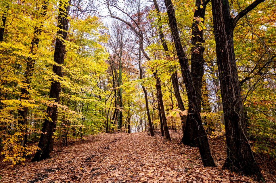 Autumn Woods Photo