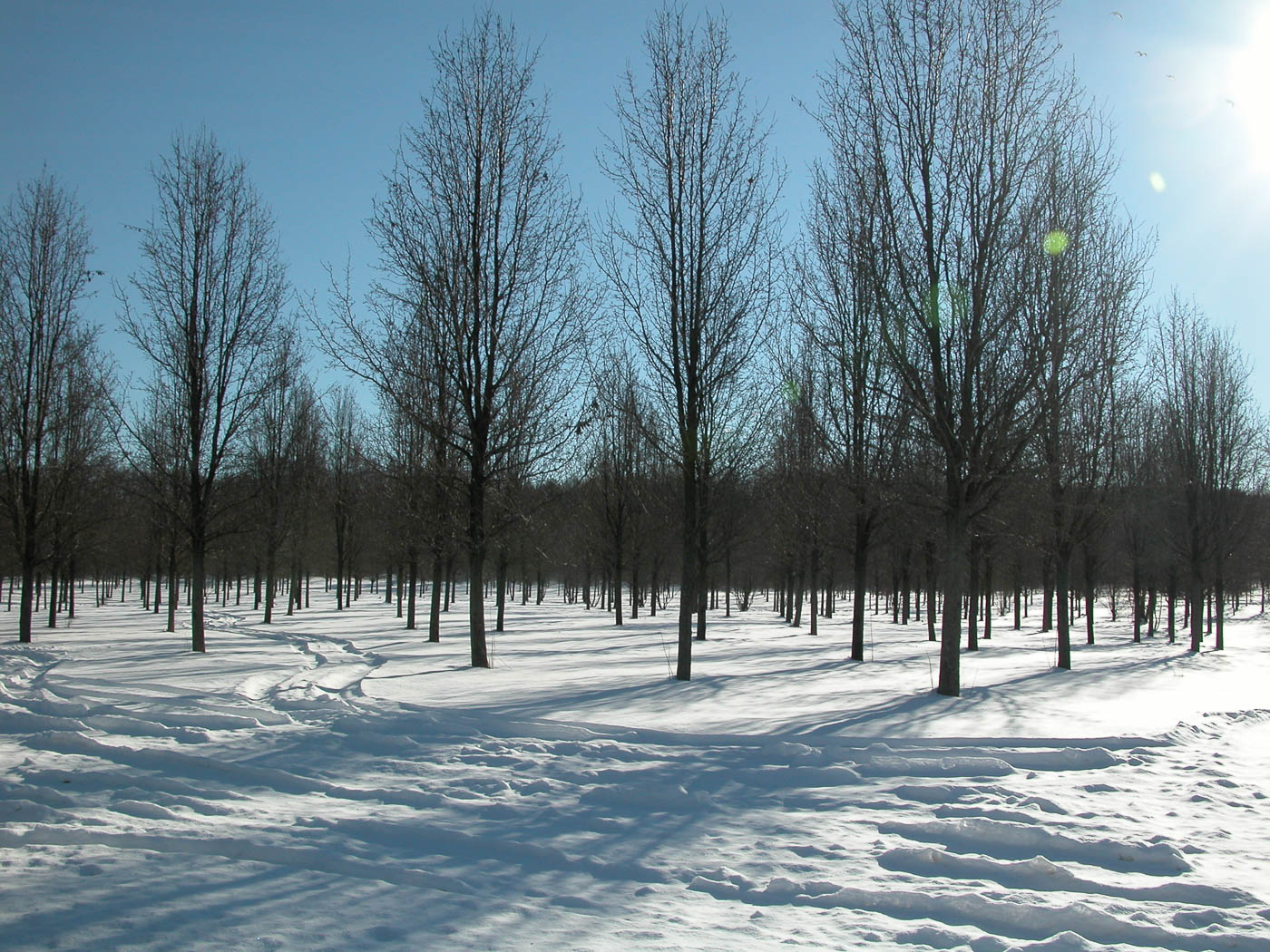 winter-trees-0161