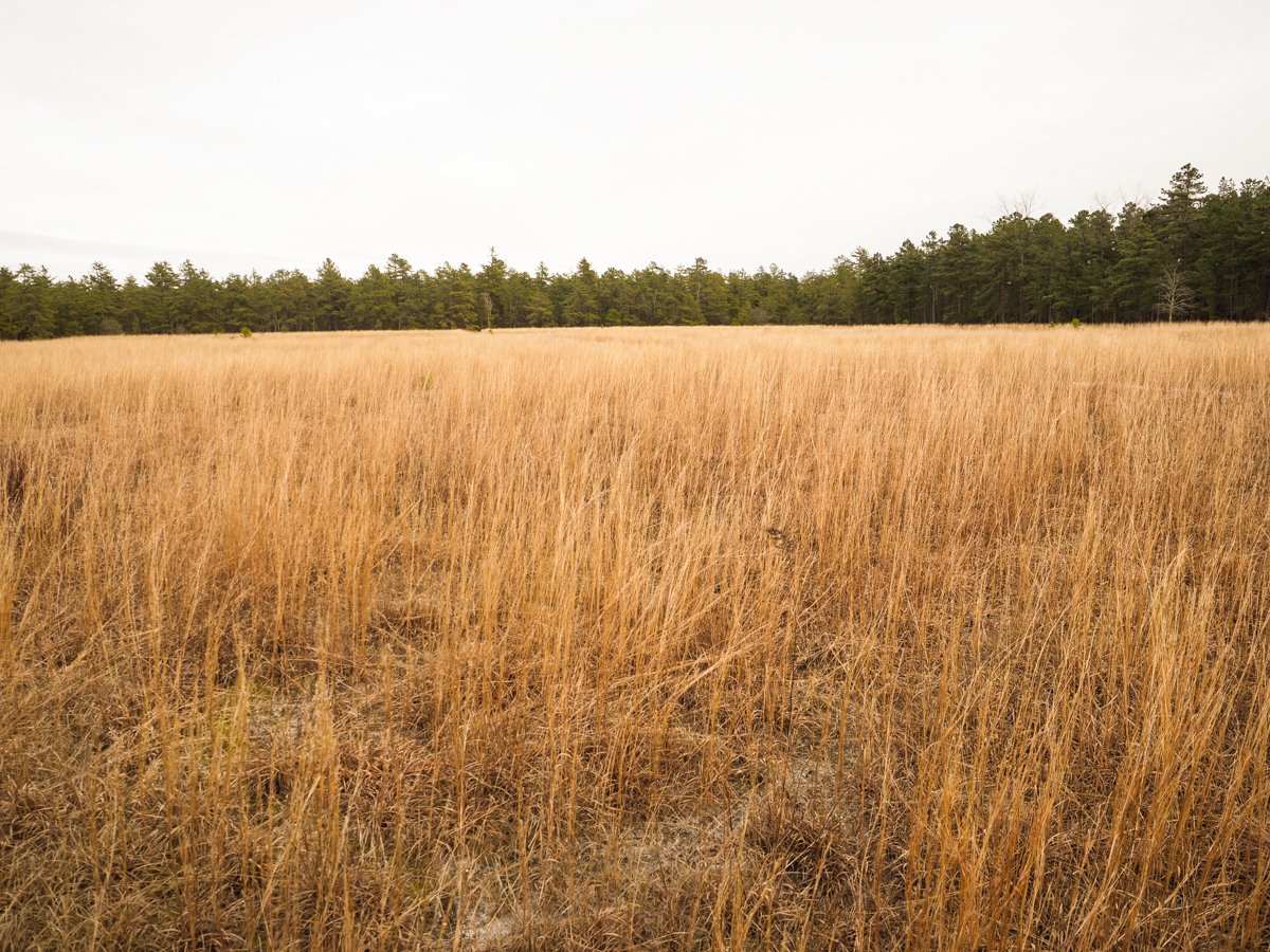 carranza-pine-lands-photo-1120053