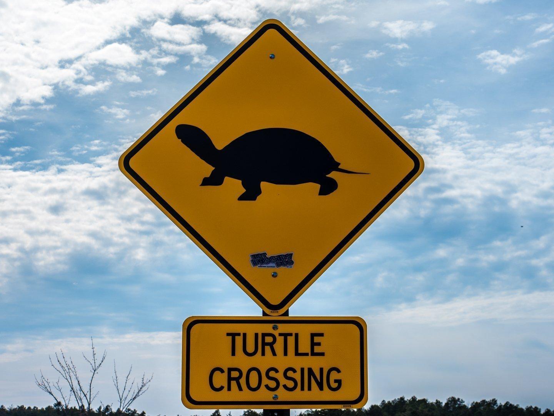 turtle-photo-3300072