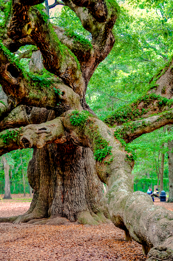 angel-oak-tree-9810