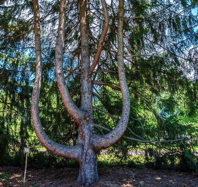 Tree Fine Art Photography
