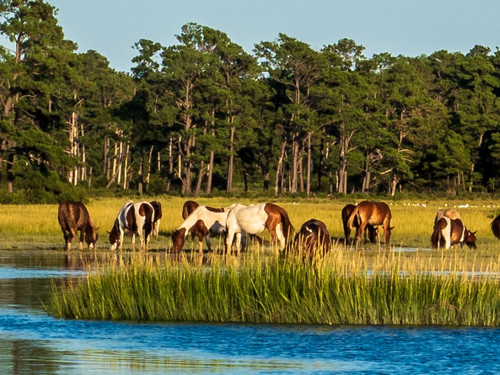 Chincoteague Island Photos 9-1-2019