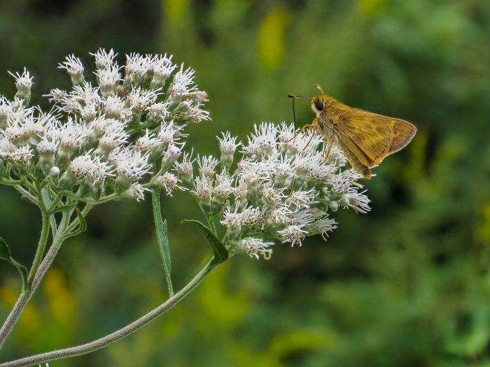Moth Photograph
