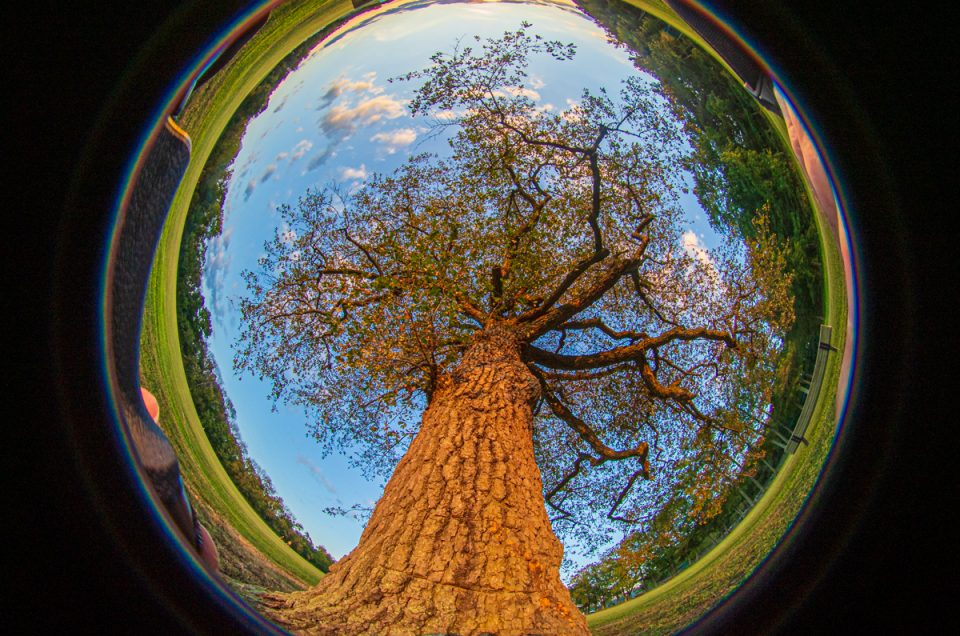 210 degree photo with a Fish Eye Tree