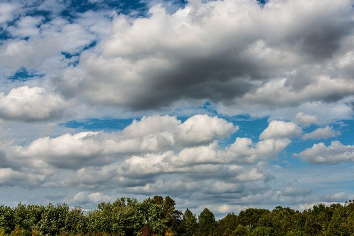 Cloudy Pinelands Landscape Days