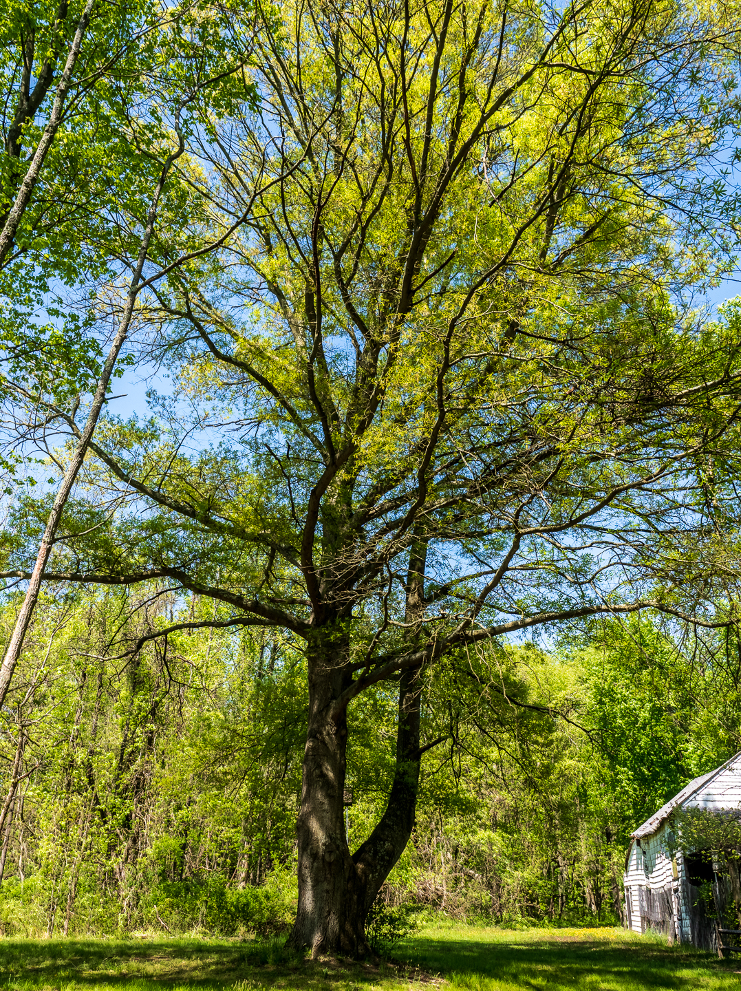rancocas-tree-photos-
