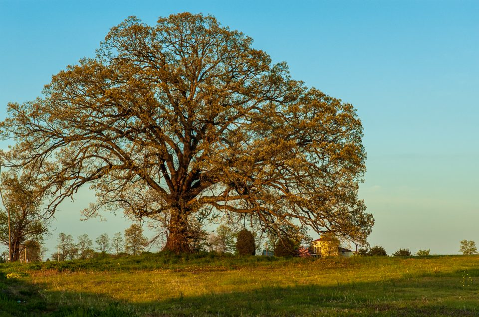 More Thursday Tree love