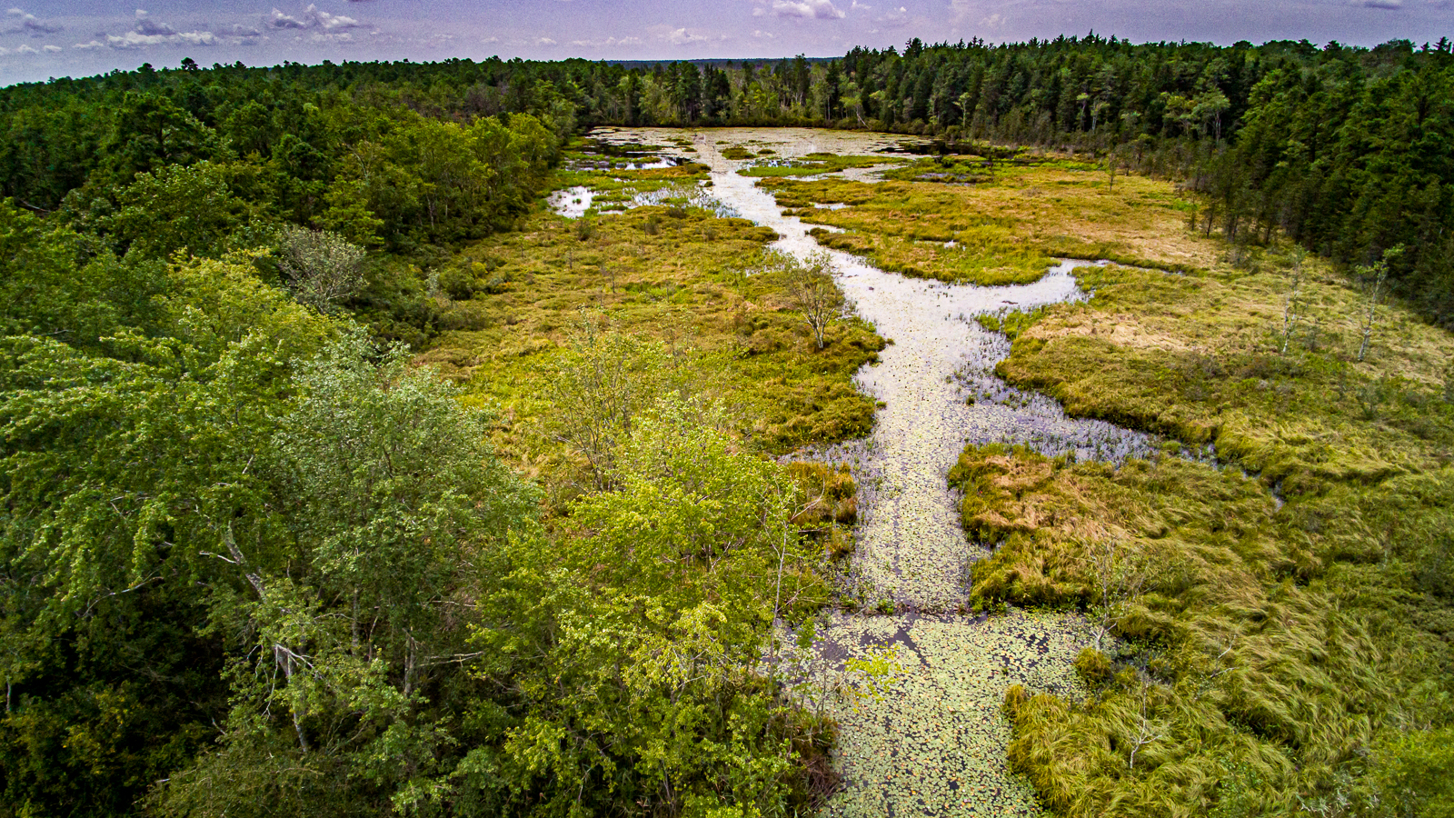 Photograph of the Pinelands at Friendship NJ