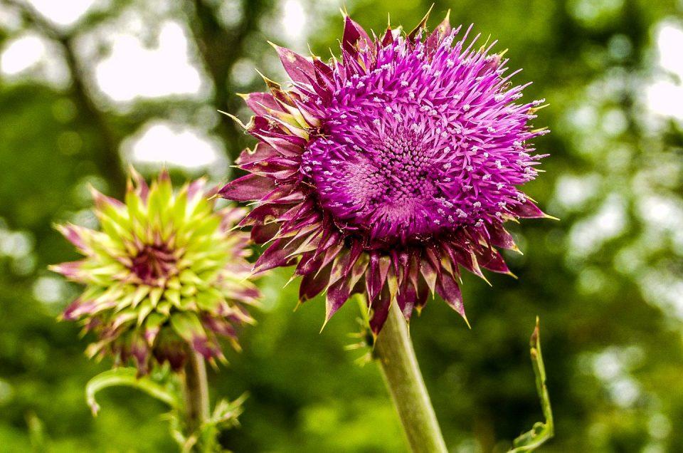 Purple Flower Photographer