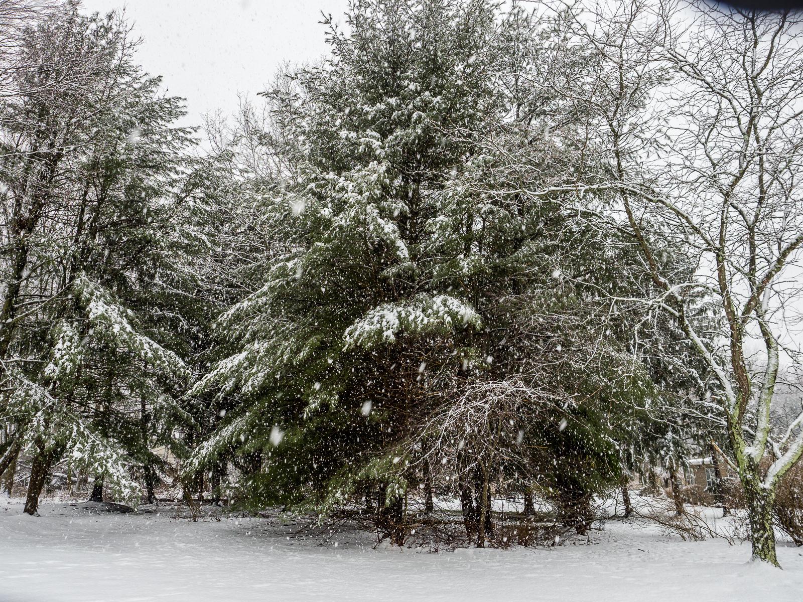 Back Yard Snow Landscape
